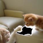 「静かにして!」大人の猫に叱られてショボーンとなる子猫ちゃんがカワイイ!