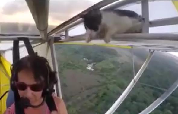 「マジか!!?」離陸した飛行機に乗っていた猫…搭乗者は思わず二度見…!?