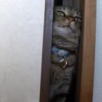 猫が引き戸に挑戦!一生懸命ねじ込もうとする姿が可愛らしい♪