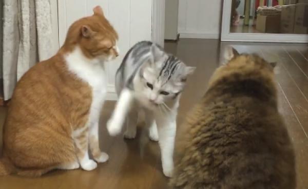 何もしてないのにヒドイにゃ…!ケンカのとばっちりをうけちゃった猫が可哀想www