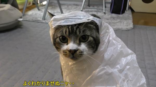盗み食いをした猫に天罰が襲い掛かる!?アクシデントにあたふたする猫www