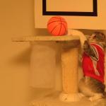 先生…バスケがしたいニャン!スラムダンクをする猫がバスケの常識を変える!?