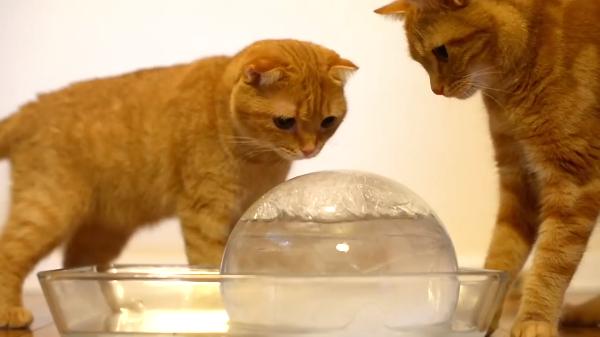 寒い冬にはアイスが食べたくなる!?氷を必死にペロペロする猫が可愛い!