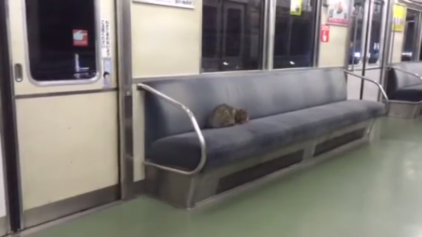 お客さん、終点ですよ~電車で寝ている珍客と車掌さんの攻防とは!?