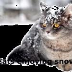 寒そうだけど楽しそう?雪で遊ぶ猫達のはしゃぎっぷりがかわいい