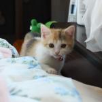 初めてのイタズラ♪ティッシュにじゃれつく子猫が可愛すぎ!