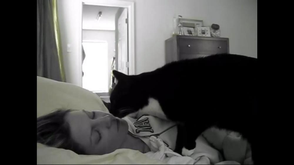 そろそろ起きる時間なんだけど?と、ふみふみパンチパンチする猫!