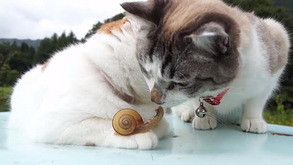 でんでんむしとキスする猫!?マイペースでのんびりした風景が癒される~