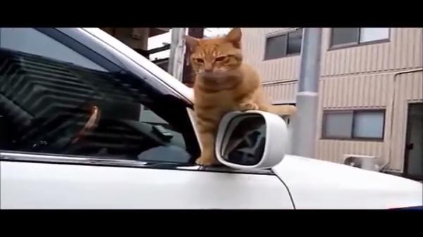 とってもおマヌケ~猫のおバカ可愛い瞬間を激写!
