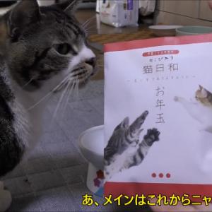 猫にもお年玉をあげよう!とっても美味しそうにお年玉を食べる猫が可愛い♪