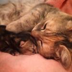 環境に馴染めず、毛布の中に隠れていた猫…。2週間後4匹の子猫を出産しました。