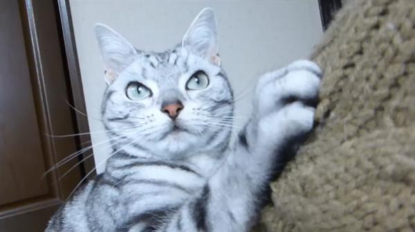 「一体誰と遊んでるニャ!」猫声アプリにヤキモチをやいちゃう乙女な猫ちゃん♪