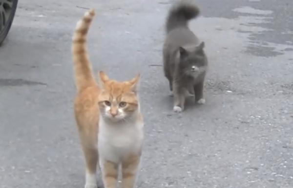 あっ間違えた!ヒト間違いに気が付いた猫が猛ダッシュで戻ってくる様子が可愛いwww