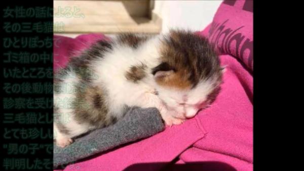 ゴミ箱から救出された子猫…診断の結果、凄く特別な存在だったことが判明…!?