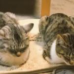 ぬくぬくホットカーペット大好き♡オン時とオフ時で反応が違う猫w