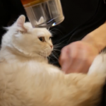 ぬくぬく気持ちいいニャ~♡ドライヤーの温風が大好きな猫ちゃん♡