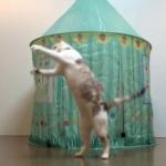 飛んで跳ねて大興奮が止まらない!100均アイテムで簡単手作り猫のおもちゃ♪