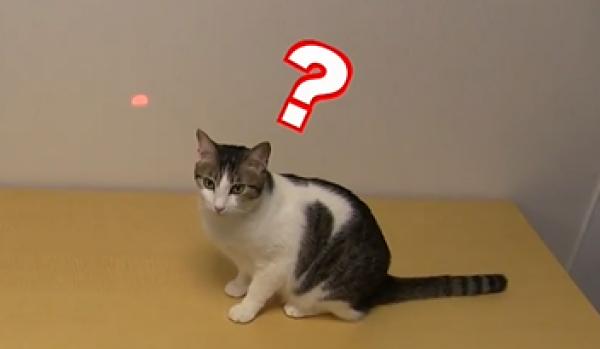 チュービームめがけて一直線!猫の反応が良すぎる「ニャンだろ~?!光線」www