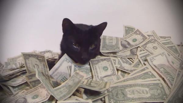 【まるで貴族の遊び】大量のドル札と戯れる黒猫ちゃんwww