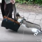 はじめてのお散歩はバッグの中『だから怖いんだってばっ!!』