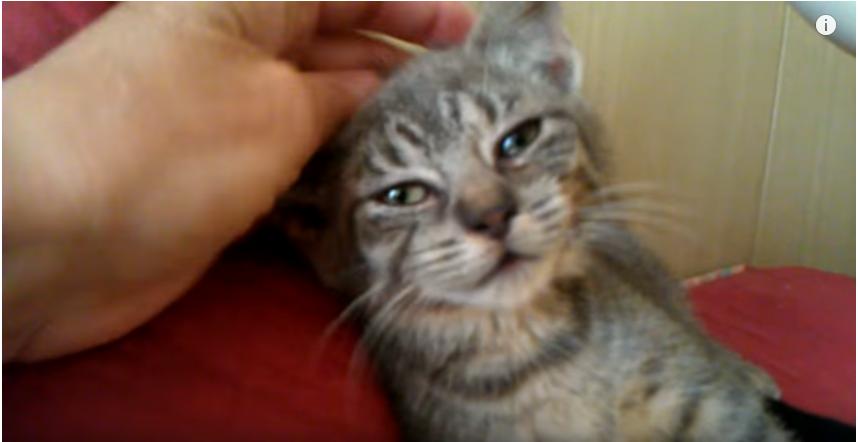 【驚異の回復】バス停で保護した瀕死の子猫♡ラッキー