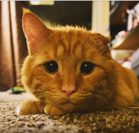 悲しそうな猫に起こった【奇跡】!運命の女性との出会いにホッコリ♡