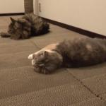 猫たちにとっては最高の環境?この爪とぎ部屋最高!