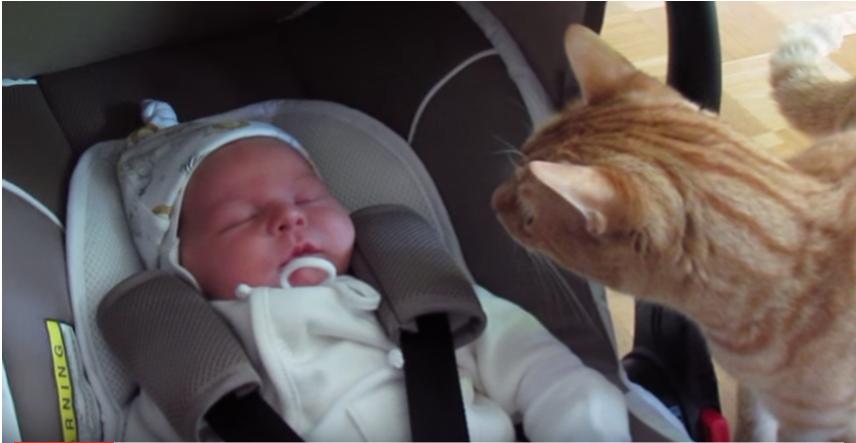はじめて赤ちゃんに会った猫♡『え?!・・・な、泣かせちゃった?!』