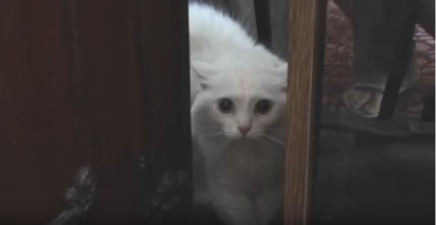 せつない♡『私を見てっ!私と遊んでっ!』嫉妬のあまりずっとしゃべる猫