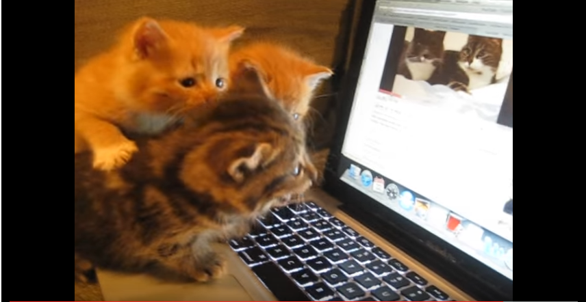 可愛すぎるリアクション!おしゃべりな2匹の猫とおしゃべりしたい子猫♡