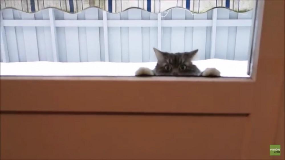 むっちゃキャッチするじゃん!雪合戦する猫!