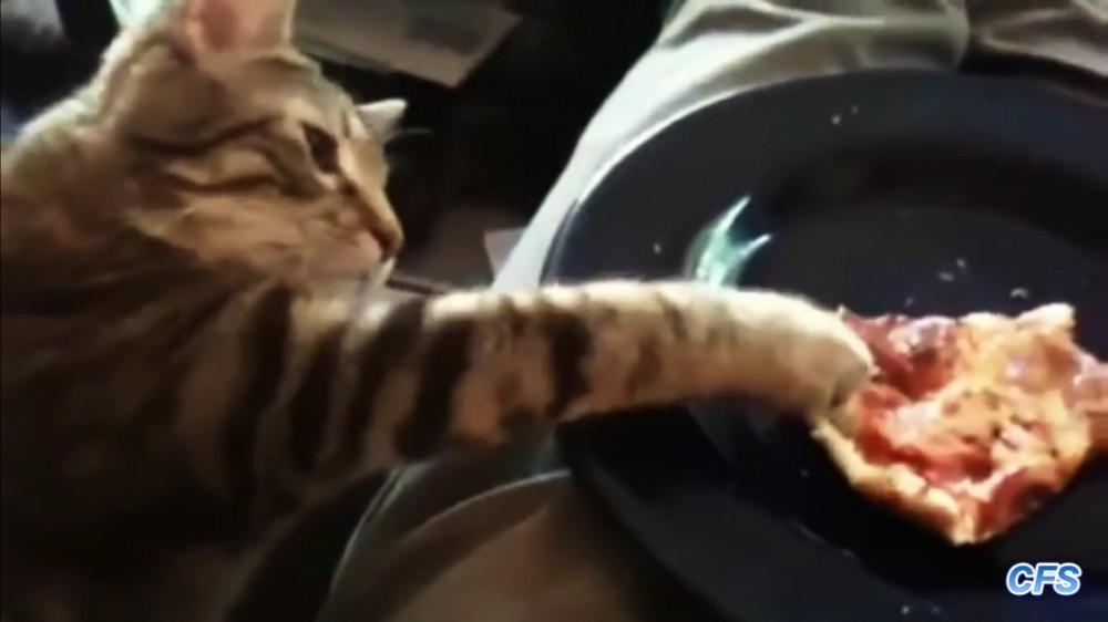 とれそうでとれにゃい…テーブルの上のピザを盗む猫たんたち~♡