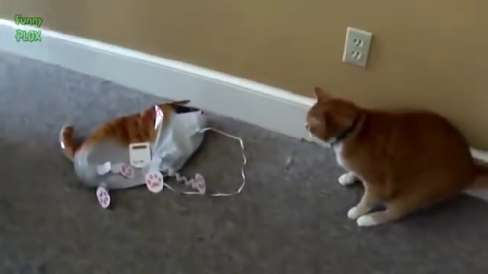 閲覧注意!そのおもちゃが風船だと知らずにじゃれる猫さん達のその後はもちろん…