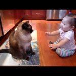 ね~ね~!聞いてよ~!赤ちゃんが必死に猫ちゃんに話しかけるのが可愛すぎる!