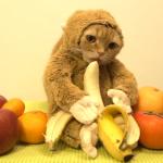 着せ替え猫ちゃんシリーズ♡本当に2本足で立ってるみたい…クオリティ高すぎ!