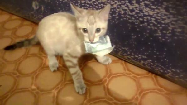 お金返してください…(泣)お札を持って逃げるイタズラ子猫ちゃんと大バトル!