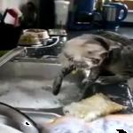 ご主人孝行……?それともいたずら?お皿を洗ってあげましょう!