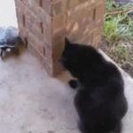 猫さんと亀さんのグルグル追いかけっこ=3