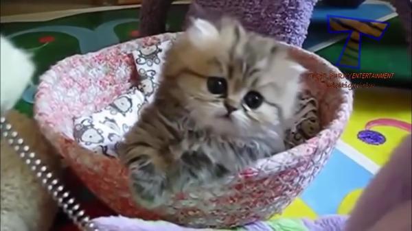 はいはい。悩殺ですね(笑)分かってても見たい!子猫の詰め合わせ♡