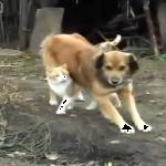 大好き♡ワンちゃんが愛しすぎる猫ちゃんと行動がイケメンすぎるワンちゃん!