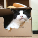 フッ…。そんな笑い方。猫もするんです