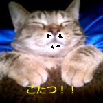 やめられない!起きられない!こたつを知ってしまった猫の寝方が天使