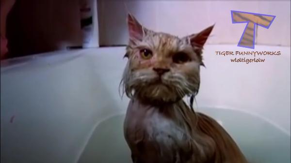 素晴らしきドボーンの数々!!お風呂に落ちる猫達が可哀想だけど可愛い!