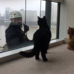 「にゃんだそれ?!」窓拭きおじさんに夢中な猫ちゃんず