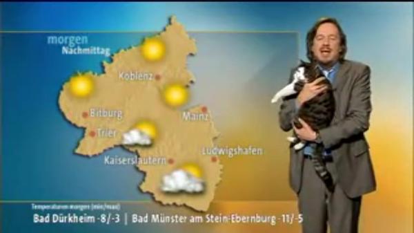 猫のお天気キャスター⭐︎突如乱入した可愛いキャスターさん!