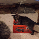 楽しそうに箱で遊ぶ子猫ちゃん♡そこにはまさかの結末が…!