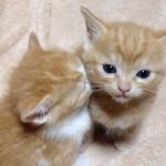 【ねむねむ動画】隣の子猫に顔をうずめて眠る子猫が可愛いすぎて天使♡
