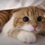 紙袋が大好きな猫ちゃん♡紙袋の中でどんな風に遊んでいるのか気になる!