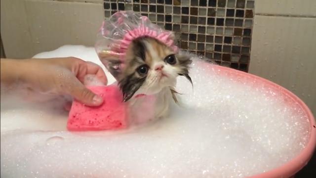 ねこちゃん IN 泡風呂♡シャンプーハット似合い過ぎ♡萌えます…
