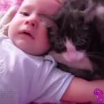 赤ちゃんを泣き止ませる猫!?猫のベビーシッターが優秀過ぎる!